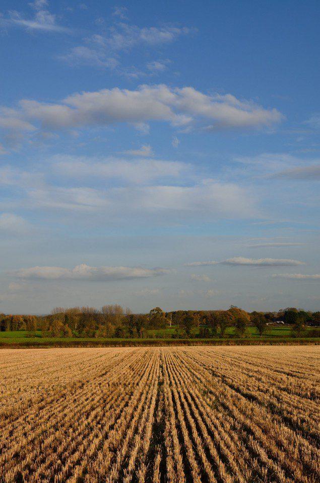 Autumn in the fields: By Steve Ross