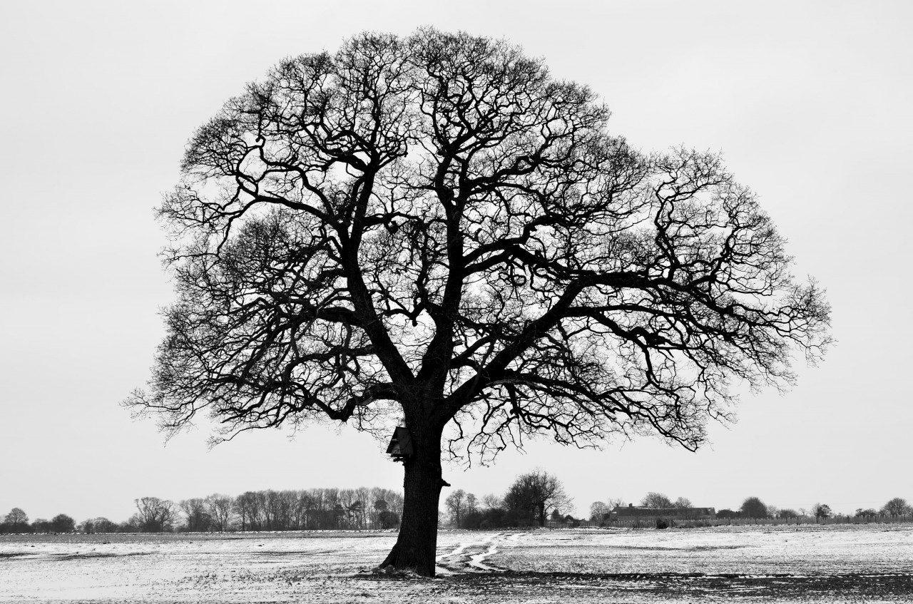 Tree in Winter Near The Nidd: By Steve Ross