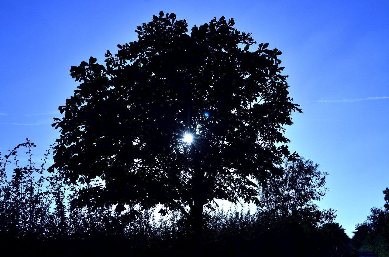 Tree & Sun Down New Lane: By Steve Ross